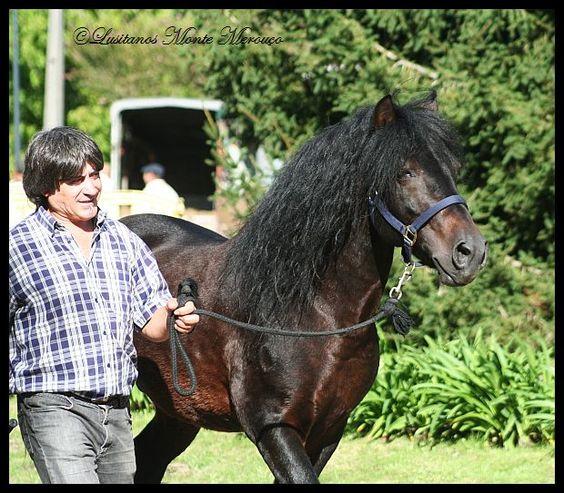 Garrano-Stallion, Vieira do Minho 2013