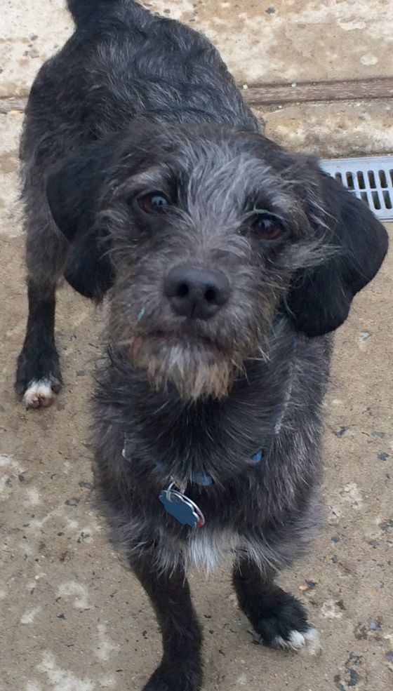 Adopt Charlie On Dog Adoption Dogs Terrier Mix Dogs