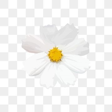 Small White Flowers Png White Flower Png Yellow Flowers Painting Flower Png Images