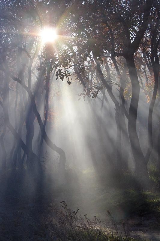 Morning rays through the mist. #PANDORAloves how it makes the forest look enchanted.: