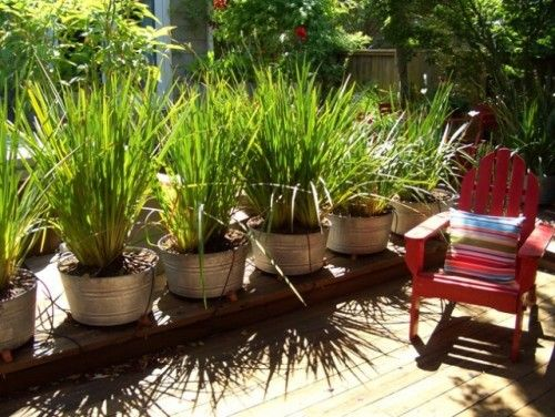 Backyard privacy grass in pots on deck yard privacy for Ornamental grass in containers for privacy