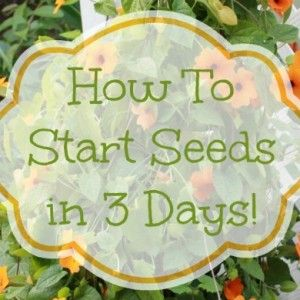 How To Start Seeds In 3 Days - Mom 4 Real