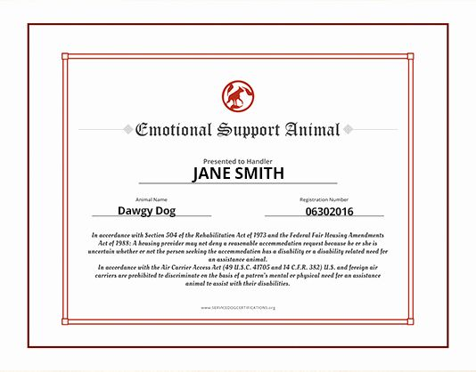 Service Dog Id Card Template Free Download Best Of Service Animal Certificate Template Reeviewer Id Card Template Card Templates Free Templates Printable Free