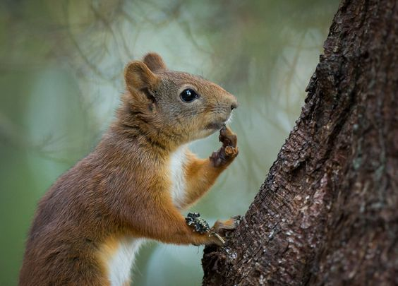 Thoughtful squirrel. by Anne Skjevik on 500px