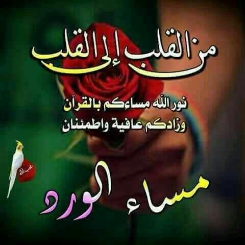 صور مساء الورد صور ورد وزهور مكتوب عليها مساء الورد والياسمين Good Morning Arabic Good Evening Islamic Posters