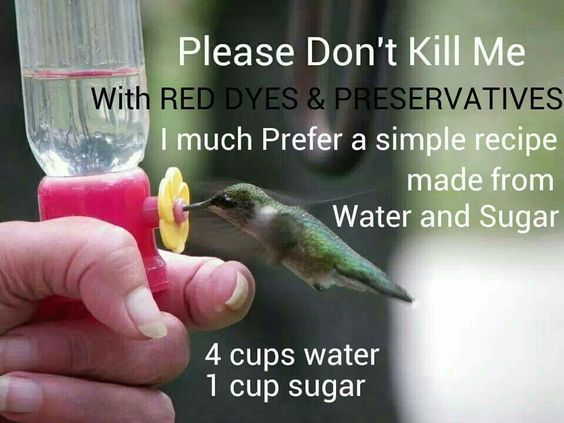 ~Hummingbird food~ 4 cups water & 1 cup sugar. Bring water to a boil, add sugar and stir until dissolved. Allow to cool. Once cooled fill feeder.