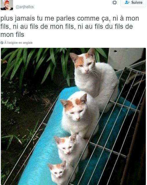 amour des animaux  - Page 3 34e660498dda36121568b739a953d259
