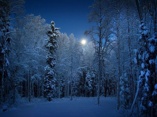 Frosted Forest, Alaska