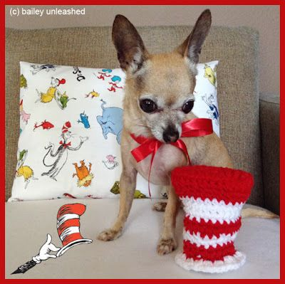 Doggie & Kitty Caperz | Giving an awesome cat his own blog!!!