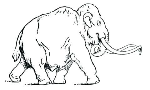Wooly Mammoth Coloring Page Mammoth Coloring Page Woolly Mammoth