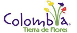Heliconia mariae Hook Beef Steak Mariae - Flores Tropicales y Exóticas de Colombia