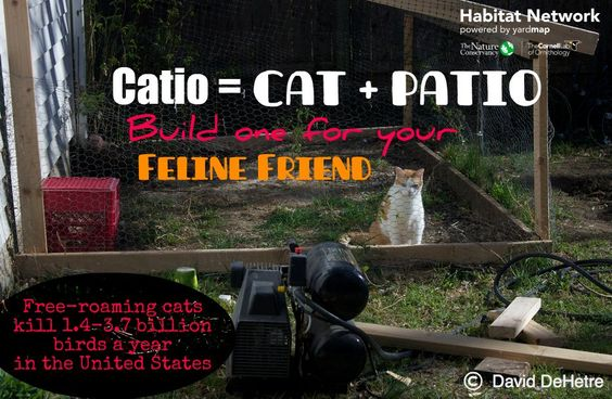 Cats have a huge impact on wildlife but one solution resonates with cat-lovers? CATIOS! Providing sunshine for naps, fresh air to breathe, and a place for our observant friends to watch and listen to the great outdoors is often all a cat needs. For more info about catios read the Learn article http://content.yardmap.org/learn/cats-catio/ or see our Pinterest page for lots of ideas at https://www.pinterest.com/habitatnetwork/catio-ideas/
