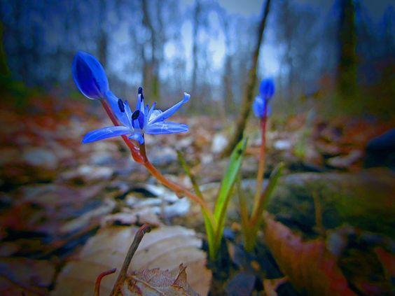 petite fleur by davidm54