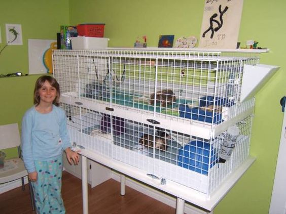 Stand need ideas for stacking 2 jumbo c c covered cages for Guinea pig stand