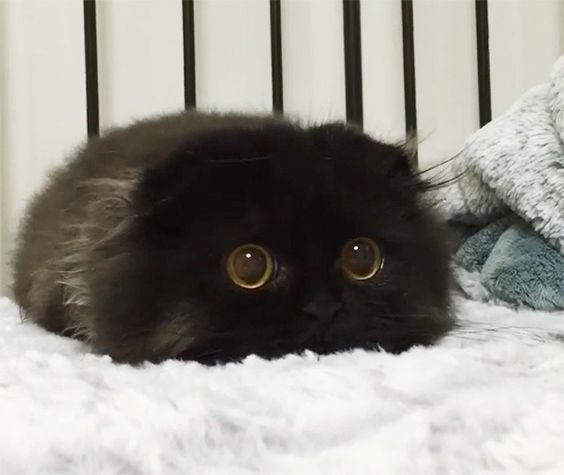 See Why Internet Is Going Crazy Over Gimo, The Cat That's All Eyes & No Face