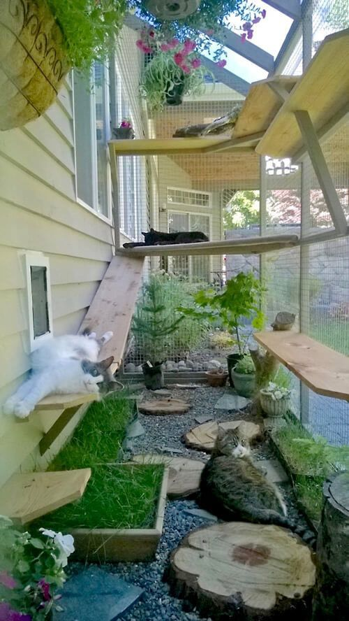 catio cat enclosure cats lounging