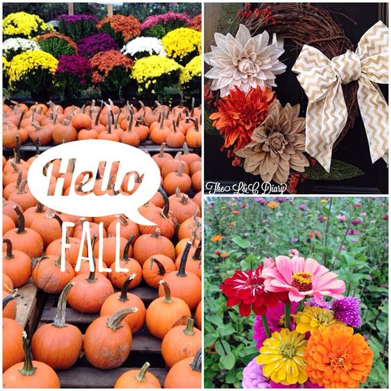 HELLO Fall! Check out Fall Activities & Decor, on the blog now!