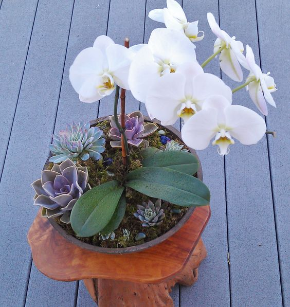 Love garden... Let your love grow...  Orchid and succulent centerpiece perfect for Valentine's Day Wedding birthday mothers dayTerra by Terri