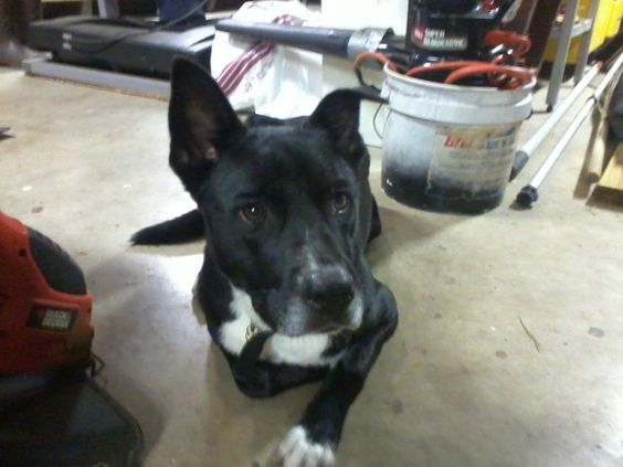 MISSING: Center Point, AL   (missing from 5th ST NW in Center Point)  CONTACT: Jennifer Adkins Yester at 205-475-2331.