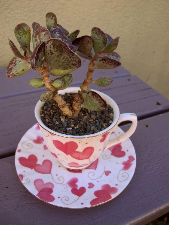 Heart Shaped Succulents in Tea Cup. LaurasLittleGardens.com