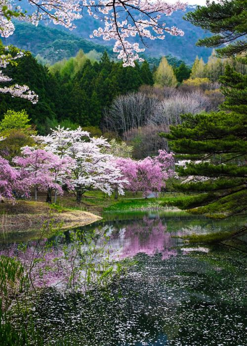Coiour My World Spring In Japan Kazuhiro Yashima Beautiful Nature Beautiful Landscapes Nature Pictures