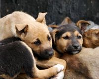 Save them from Thailand's illegal dog-meat trade!