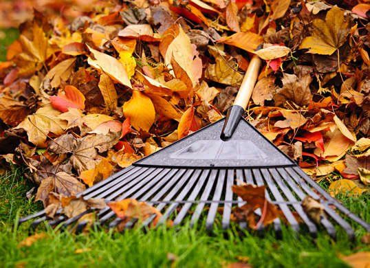 7 Lawn Care Myths Debunked Fall Lawn Care Lawn Care Lawn Care Tips