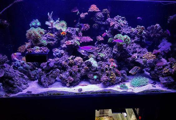 90 Gallon Full Tank Shot #reef #polyplab #mixedreef #reefpack #reeftank…