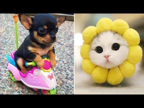 Perrito Más Lindo Del Mundo Perro Mas Gracioso Del Mundo Cute Baby Animal En 2020 Vídeos De Animales Adorables Humor Divertido Sobre Animales Gatos Y Perros Lindos