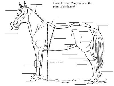horse body parts coloring pages