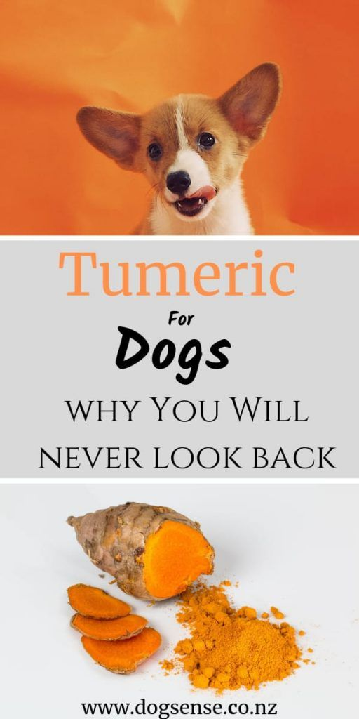 Can You Give Dogs Turmeric Or Is It Just A Big Con Dog Sense
