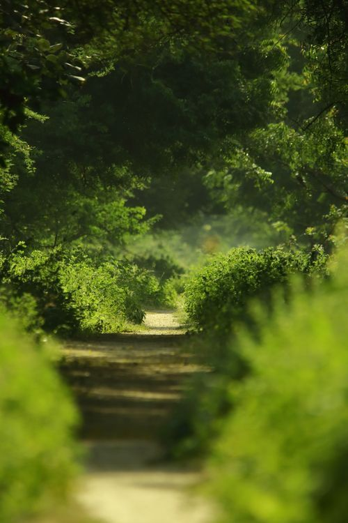 Lush Of Greenery Photo By Anurag Bhatu National Geographic Your Shot Nature Photography Landscape National Geographic