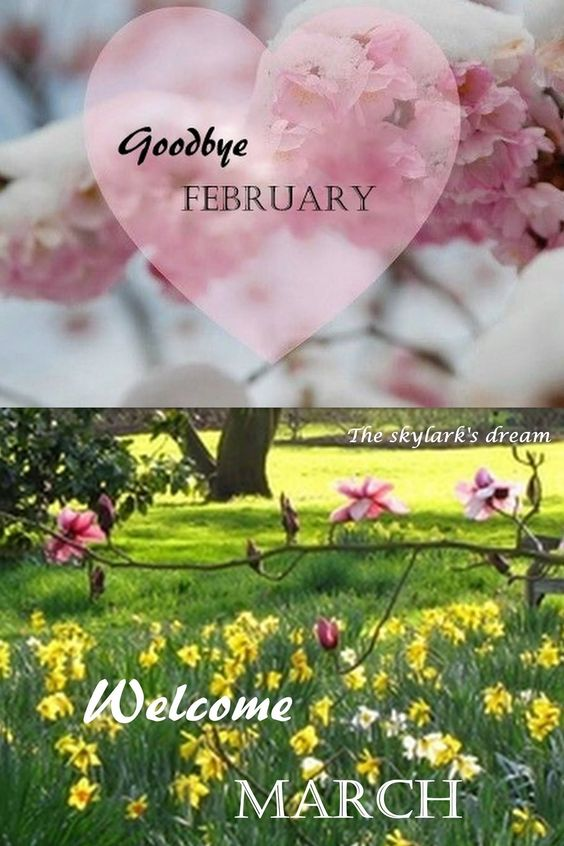 Goodbye February Welcome March Images Quotes #marchimages #marchpictures #marchquotes #marchwallpaper #goodbyefebruaryhellomarch