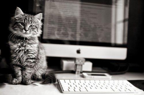 #kitty #Kitten #cat #computer #apple #Mac