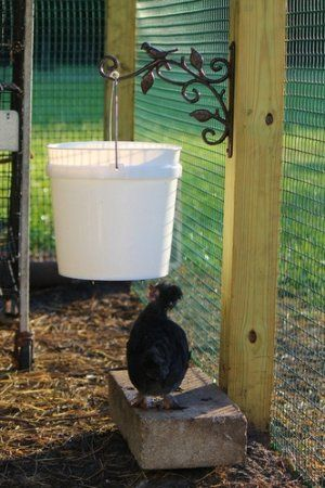 love this idea of using a iron bracket for hanging a chicken waterer