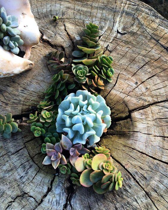 Aqu mostramos un hermoso arreglo hecho con suculentas y for Arboles florales para jardin