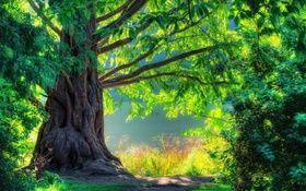 Queste immagini 3D della natura sono il meglio del meglio e fare in modo che ti senti rilassato