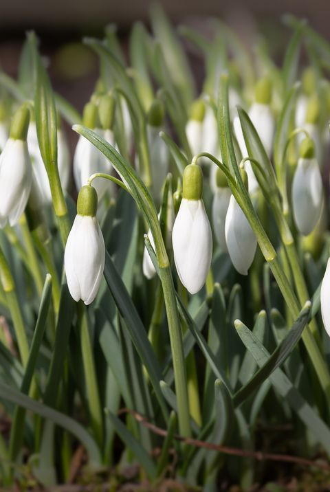 15 Best Plants That Bloom In Winter Flowers That Develop In The Cold In 2021 White Flowering Plants Pollinator Plants Winter Flowers