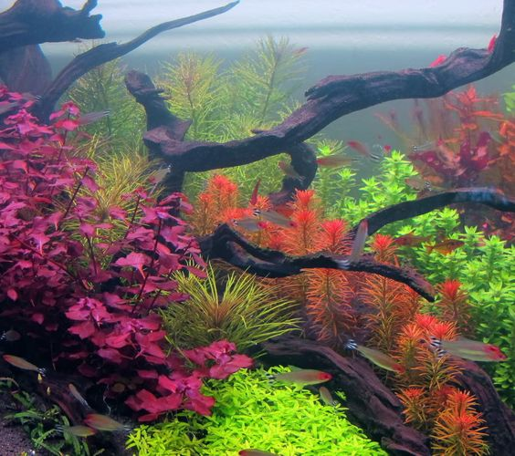 120 gallon Dutch Planted something or another - Aquarium Plants - Barr ...