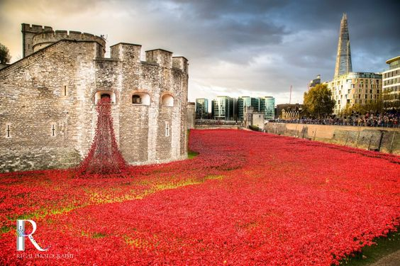 Tower of London's Blood-Red Ceramic Poppies Display on Remembrance Day via 500px