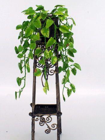 Image result for devil's ivy