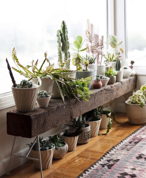 Indoor plant bench. Just what I need in front of the windows in the office - timber and legs.:
