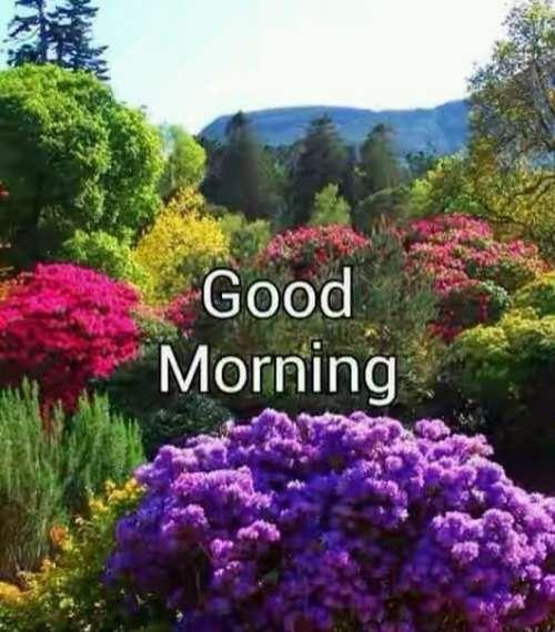 Good Morning Greetings Beautiful Nature Beautiful Landscapes Nature Photography