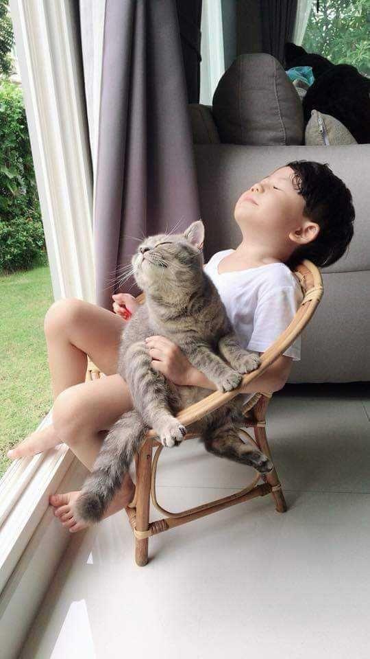 20 photos qui prouvent que votre enfant doit vivre avec un chat