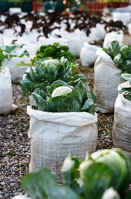 Grow bags: