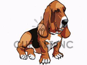 Black brown and white basset hound