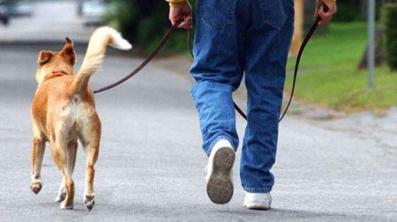 CURIOSITÀ. Arriva la tassa sui cani, ecco quanto dovrai pagare per ogni animale domestico a cura di Redazione - http://www.vivicasagiove.it/notizie/curiosita-arriva-la-tassa-sui-cani-quanto-dovrai-pagare-animale-domestico/