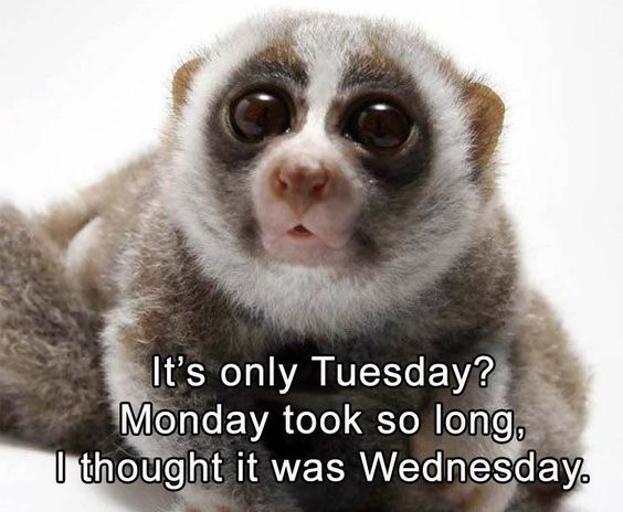 100 Funny Tuesday Memes Pictures Images For Motivation Funny Tuesday Images Funny Tuesday Meme Funny Animal Pictures
