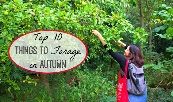 Top 10 Things to Forage in Autumn