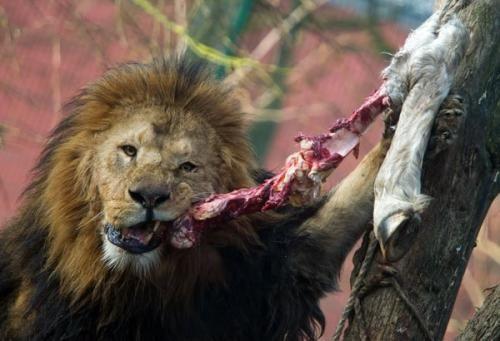 Scienza: I #mammiferi sono gli unici a masticare il cibo? #Sapevatelo (link: http://ift.tt/2cKAqgX )